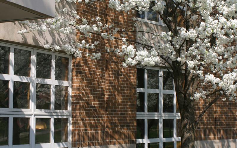 facfloweringtrees