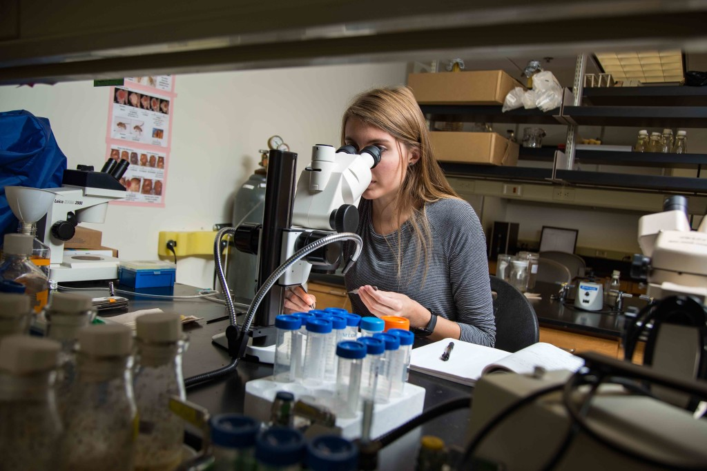 Madison Mix is researching the possible connection between the gut microbiome and Alzheimer's disease.