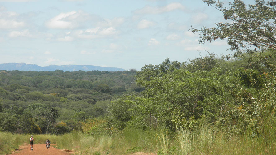 bikes in lush africa