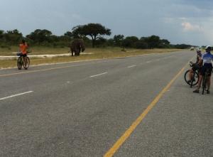 Elephant Highway