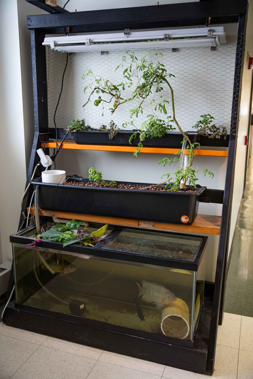 Aquaponics system featuring plants that don't require soil and fish that live on the nutrients they provide.
